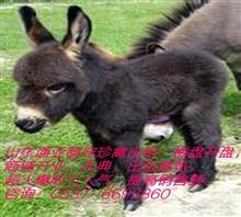 羊驼租赁展览河北沧州市地区出租孔雀,大雁展览