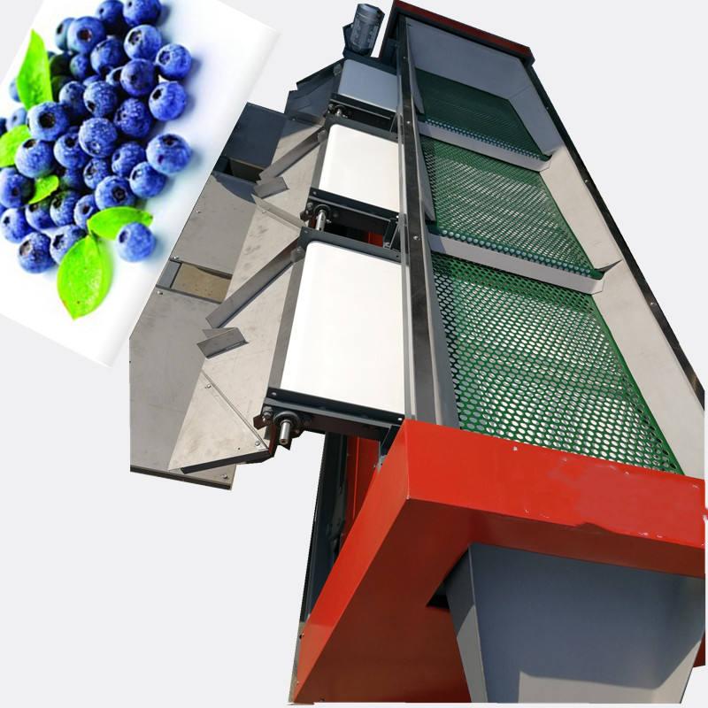 速度偉明自動化藍莓選果機質量保證
